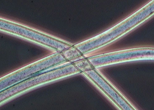 Polyester under microscope.